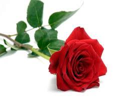 mawar 2